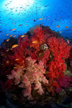Fiji Reefs Color