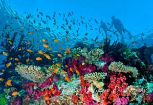 Fiji Snorkeling -- Rainbow Reef