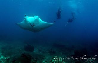 Fiji Manta Rays